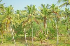 Poco jardín de los árboles de coco en el patio de hogares indios Imagenes de archivo