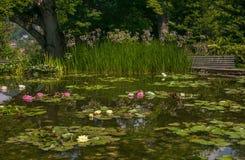 Poco lago con las flores de loto hermosas en el jardín italiano Fotos de archivo libres de regalías