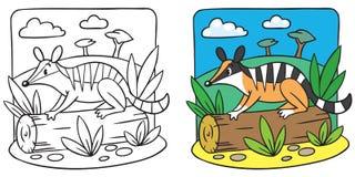 Poco libro de colorear del numbat Imagen de archivo libre de regalías