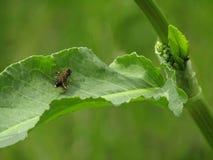 Poco mosca en las hojas foto de archivo
