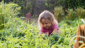 Poco muchacha linda está comiendo la fresa que se sienta cerca de la cama de planta en el jardín almacen de video