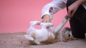 Poco niños que juegan con el perrito lindo del beagle, refugio para animales, adopción del animal doméstico almacen de video