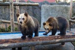 Poco oso en el parque zoológico Imagenes de archivo