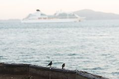 Poco pájaros encaramados al borde del muelle del torpedo en la salida del sol, San Francisco foto de archivo