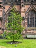 Poco parco nella cattedrale di Chester Fotografia Stock