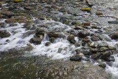 Poco parco provinciale del fiume di Qualicum Fotografie Stock Libere da Diritti