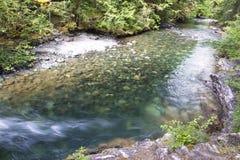 Poco parco provinciale del fiume di Qualicum Immagini Stock Libere da Diritti