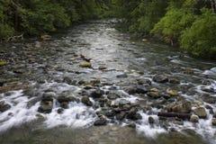Poco parco provinciale del fiume di Qualicum Fotografia Stock
