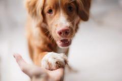 Poco perfil del perro del río Foto de archivo