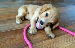 Poco perrito que juega la bola fotografía de archivo