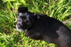 Poco perro que se sienta en la hierba foto de archivo