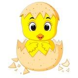 Poco polluelo de la historieta tramado de un huevo Imagen de archivo