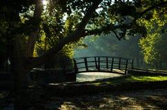 Poco ponte di legno sui primi raggi di sole alla mattina nel parco di Topcider Fotografie Stock Libere da Diritti