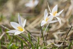 Poco prado de la primavera fotos de archivo