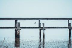 Poco puerto deportivo adentro con una gaviota en fondo foto de archivo libre de regalías