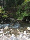 Poco río adentro Fotos de archivo libres de regalías
