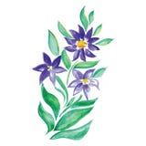 Poco ramo floral de la acuarela hermosa libre illustration