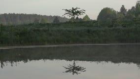Poco reflexión del árbol en el agua en una mañana tranquila temprana Atm?sfera misteriosa en paisaje de la naturaleza metrajes