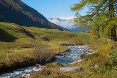 Poco ruscello nelle alpi svizzere Immagini Stock