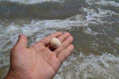 Poco shell Imagen de archivo libre de regalías