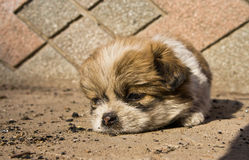 Poco uno stanco Fotografia Stock