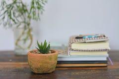 Poco vaso di argilla di aloe Vera Fotografie Stock