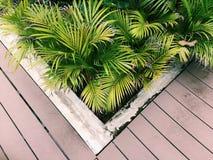 Poco verde Fotografia Stock