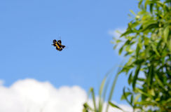 Poco volo della farfalla di colore sul cielo blu Fotografia Stock