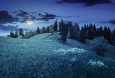 Pocos árboles en prado de la ladera en la noche Fotografía de archivo