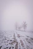 Pocos árboles ocultados en niebla al lado del camino quebrado Foto de archivo libre de regalías