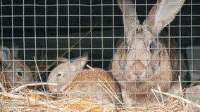 Pocos conejos nuevamente nacidos con su funcionamiento de la mamá y comer en jaula metrajes