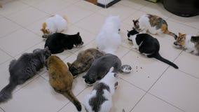 Pocos gatos que comen el alimento para animales seco junto almacen de metraje de vídeo