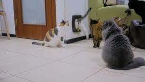 Pocos gatos que esperan tiempo de la comida almacen de video