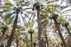Początek sezon drzewka palmowe zdjęcia stock