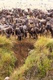 Początek wielka migracja antylopy africa fotografia royalty free