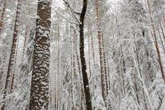 początkująca zima Zdjęcia Stock