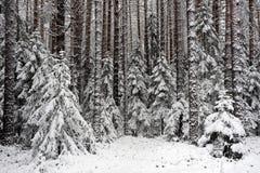 początkująca zima Fotografia Royalty Free