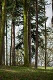 Początek wiosna w Angielskim parku lub lesie Zdjęcie Stock