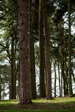 Początek wiosna w Angielskim parku lub lesie Zdjęcie Royalty Free