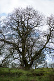 Początek wiosna w Angielskim parku lub lesie Zdjęcia Stock