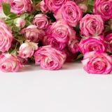 Pocztówka od żywych różowych róż Obrazy Royalty Free