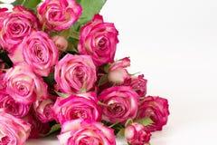 Pocztówka od żywych różowych róż Fotografia Stock