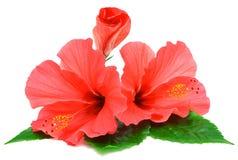 Pocztówka od poślubników kwiatów Zdjęcie Stock