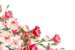 Pocztówka z eleganckimi kwiatami Zdjęcie Royalty Free
