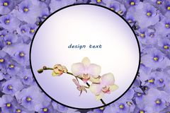 Pocztówka z sprig orchidea i round rama Fotografia Stock