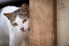 Pocztówkowy kot Obrazy Royalty Free