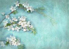 Pocztówkowy kwiecisty szablon Obrazy Royalty Free