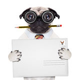 Poczta dostawy poczta pies Obrazy Royalty Free