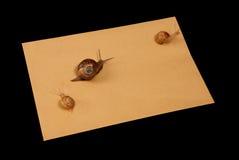 poczta ślimaczek Zdjęcie Stock
