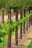 poczta rzędu trellis winogrady Zdjęcia Stock